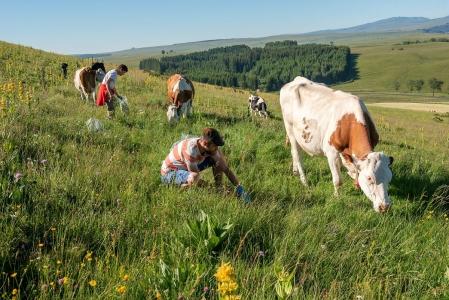 @INRAE / MAITRE Christophe (Prélèvement des échantillon d'herbe correspondant précisément au bol alimentaire des vaches suivies. Travail d'observation.)